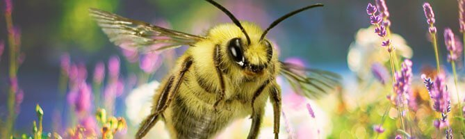 2016-2017-bee-and-other-pollinators-learn-more