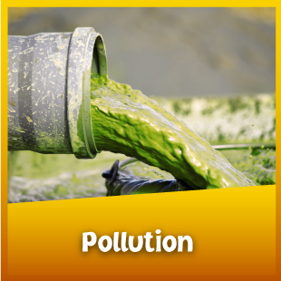 AllAboutAnimals-Pollution