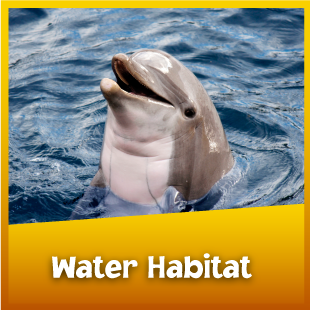 AllAboutAnimals-WaterHabitat