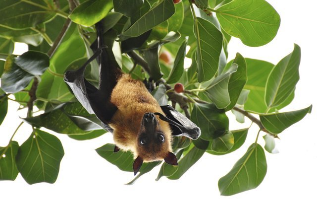 5 Facts About Bats And Pollination