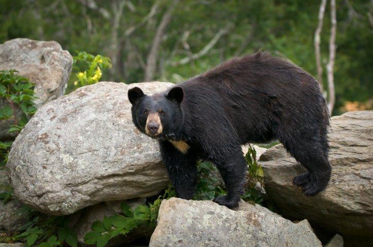 Top Ten Coolest Hibernating Animals   Earth Rangers Wild