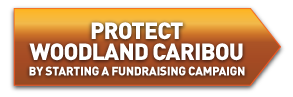 protect-woodland-caribou-button