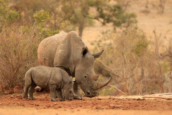 Using STEM to Save Rhinos | Earth Rangers Wild Wire Blog