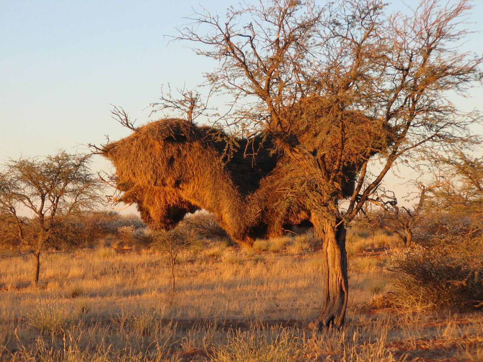 A Nest For A Few Hundred Birds Earth Rangers Where Kids Go To