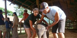 global vets, Thailand, baby, elephant