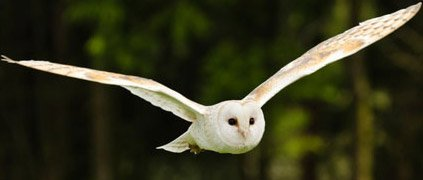 Sonic the Barn Owl | Earth Rangers Wild Wire Blog