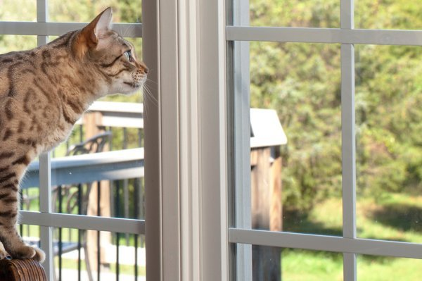 Training An Outdoor Cat To Stay Inside Can Be Tough So You Ll Need Have Patience Here Are Some Tips Help