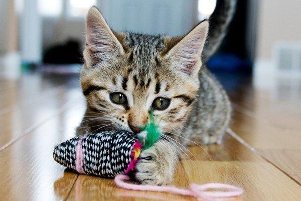 outdoor cat care