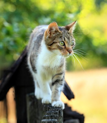 It S Natural For Cats To Hunt Just Look At Their Larger Feline Relatives We Wouldn T Want Be Near A Tiger When Hungry That Sure
