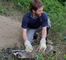Josh Sayers with an American badger