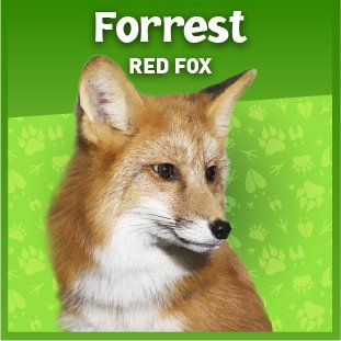 Forrest the fox