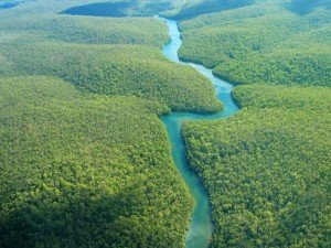 amazon forest arial