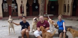 Dogs Global Vets India