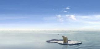 polar bear melting sea ice climate change
